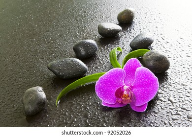 Pink orchid and black stones.
