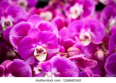 Pink orchid close up texture background. Botanical flower pattern in magenta color with copy space beauty and cosmetic or spa concept.