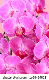 Pink orchid close up view  background.