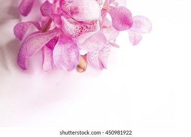 Pink orchid closed up on white background