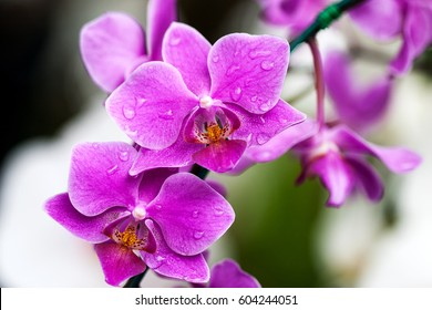Pink orchid flower blossom in a garden