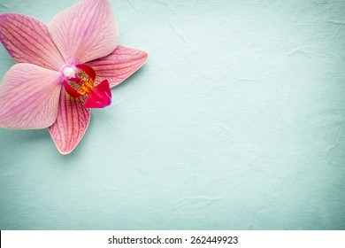 Pink orchid flower. Greeting background.