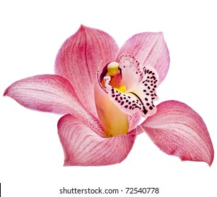 Pink Orchid flower head close up isolated on white background