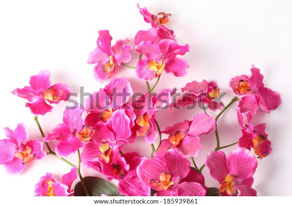 Pink orchid flower, isolated on white