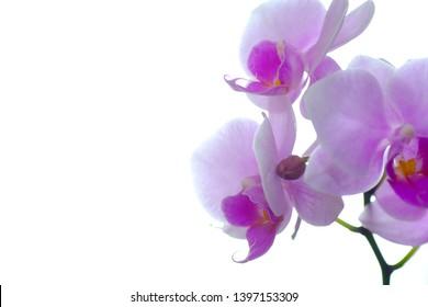 pink orchid flower petal closeup