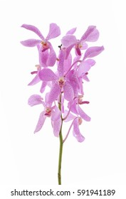 Pink orchid flowers, isolated