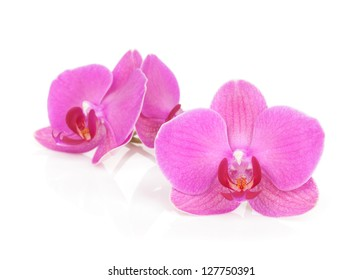 Pink orchid flowers. Isolated on white background