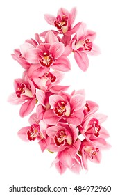 Pink orchid flowers isolated on white background
