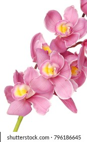 Pink Orchid flowers isolated-white background