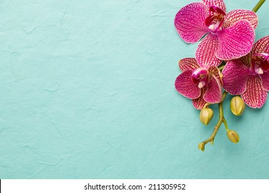 Pink orchid flowers on a pastel background. Pink orchid background.