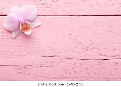 Pink orchid flowers on the pink pastels background.