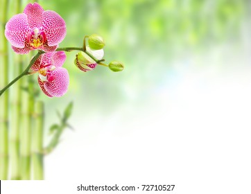 pink orchid and green background