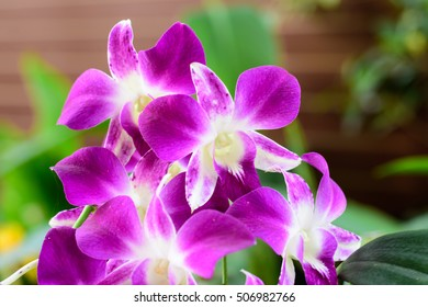 pink  orchid with green leaves in background.