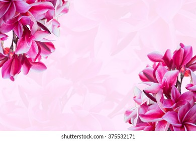 pink orchid on pink background