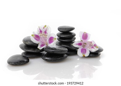 pink orchid on black stacked stones