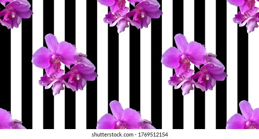 Pink orchid on black and white striped background. Isolated flowers. Seamless floral pattern for fabric, textile, wrapping paper. Tropical flower