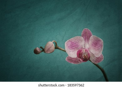 Pink orchid on a teal coloured background with grungy texture