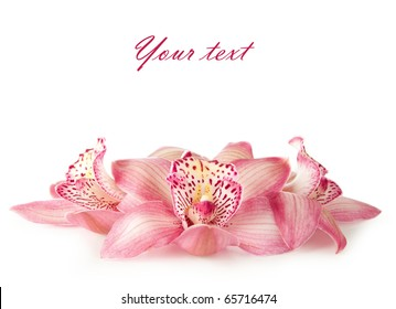 pink orchid on white