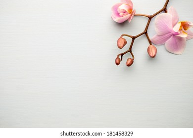 Pink orchid on the wooden background.