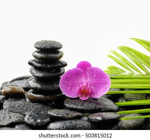 Pink orchid with palm and stacked stones on wet pebbles