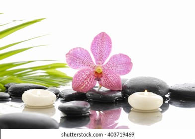 pink orchid and wet black stones white candle with green leaf