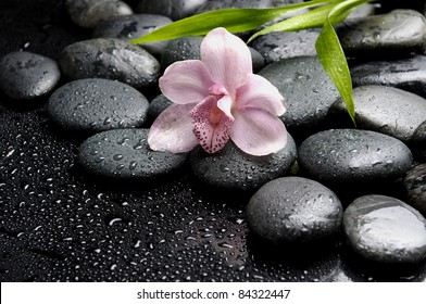 Pink orchid with zen stones and bamboo leaves in water drops