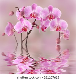 Pink orchids flowers background design