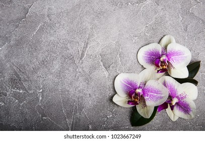 Pink orchids flowers on a grey stone background