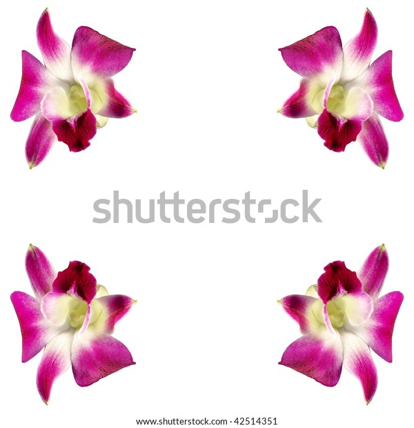 Pink orchids in four corners isolated on a white background