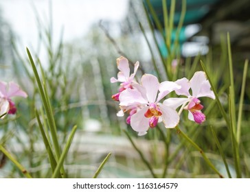 Pink orchids in a lovely garden