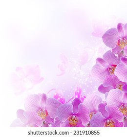 Pink orchids on blur background and glowing stars