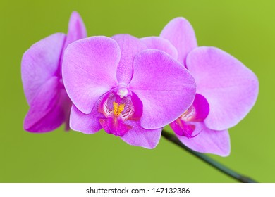 Pink orchids on the green background