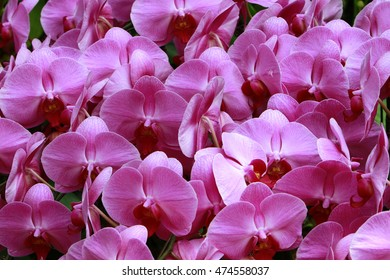 Pink orchids on natural background