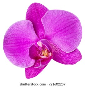 pink orchids phalaenopis flower isolated on white background. Clipping Path. Full depth of field.