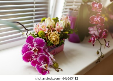 pink orchids in a vase on a windowsill in soft focus