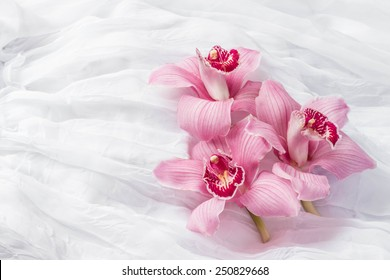 Pink orchids - white background
