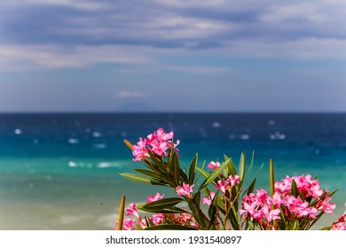 pink orleander flower in front of the ocean and blue sky in calabria