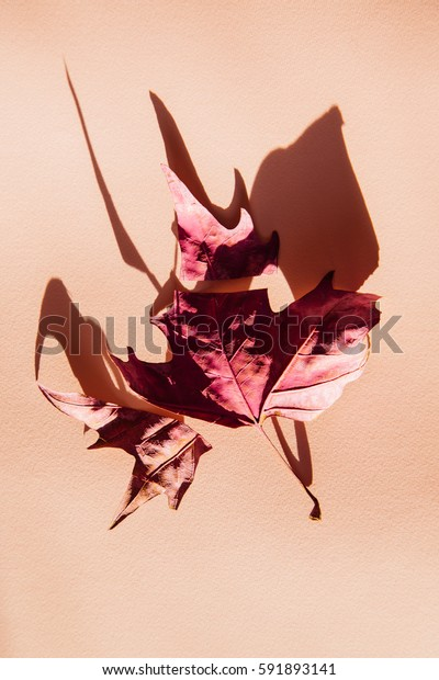 pink painted dry leaf, abstract concept theme