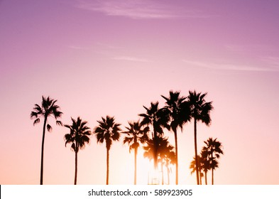 Pink palm tree sunset in Venice Beach, California.