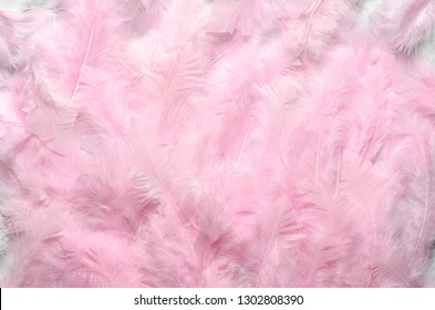 Pink pastel feathers as texture, background. Flat lay, top view.