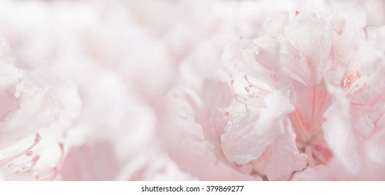 Pink pastel floral romantic background and bokeh, banner