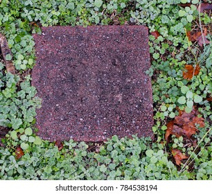 Pink Paver Stone Surrounded by Green Groundcover