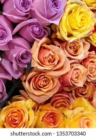 Pink, peach and yellow rose buds in a bouquet