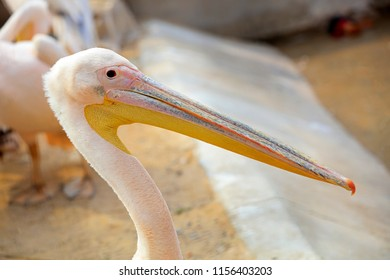 pink pelican in the park