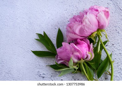 Pink Peonies Lying down on a white plaster background
