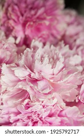 pink peonies in pastel colors close-up, flower pattern, vintage photo processing