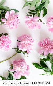 Pink peonies pattern on a white background