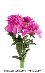 Pink peonies in a vase  isolated  on a white background