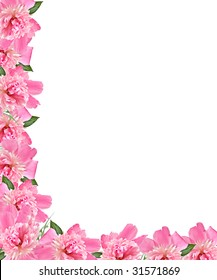 A  pink peony floral border on white background.