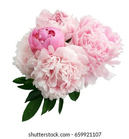 Pink peony flower isolated on white background